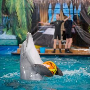 Дельфинарии, океанариумы Дербешкинского
