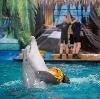 Дельфинарии, океанариумы в Дербешкинском