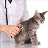 Ветеринарные клиники в Дербешкинском